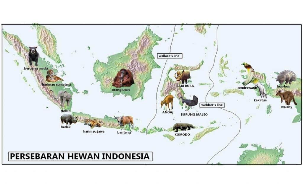 Persebaran Hewan Indonesia
